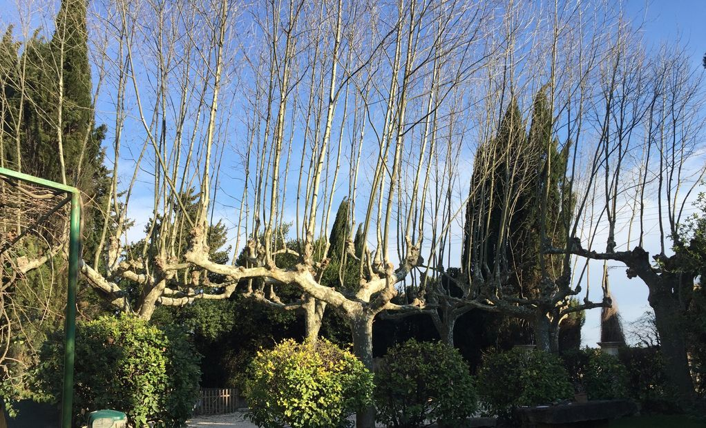 Elagage_arbres_nimes_branches_agence_montpellier.jpg