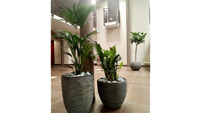 decoration_vegetale_sem_espaces_verts_installation_plantes_en_pot.png